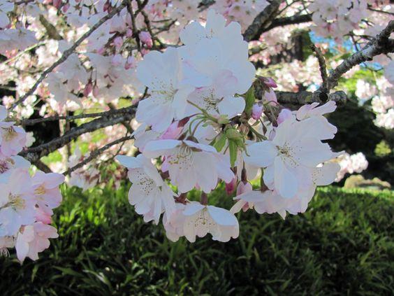 Japanese Tea Garden, Golden Gate Park, San Francisco (2011)