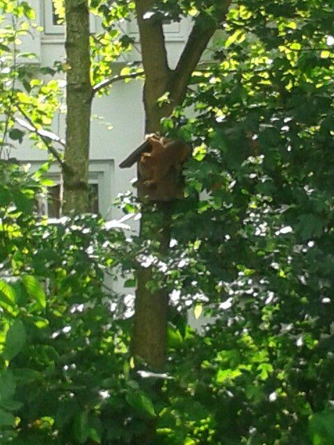 Ook een eekhoorn houdt van pindakaas