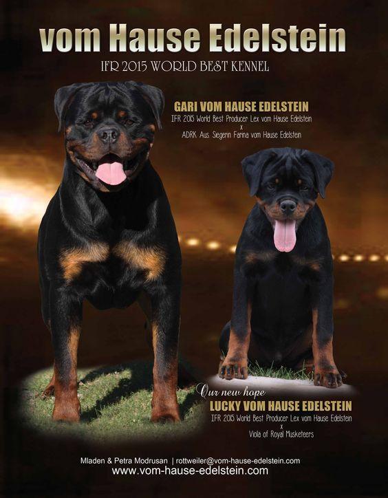 Vom Hause Edelstein IFR 2015 World Best Kennel Mladen & Petra Modrusar rottweiler@vom-hause-edelstein.com www.vom-hause-edelstein www.facebook.com/hause.edelstein