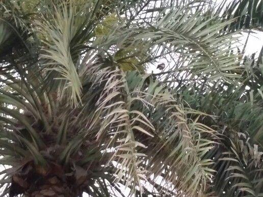 Aviary & the date tree