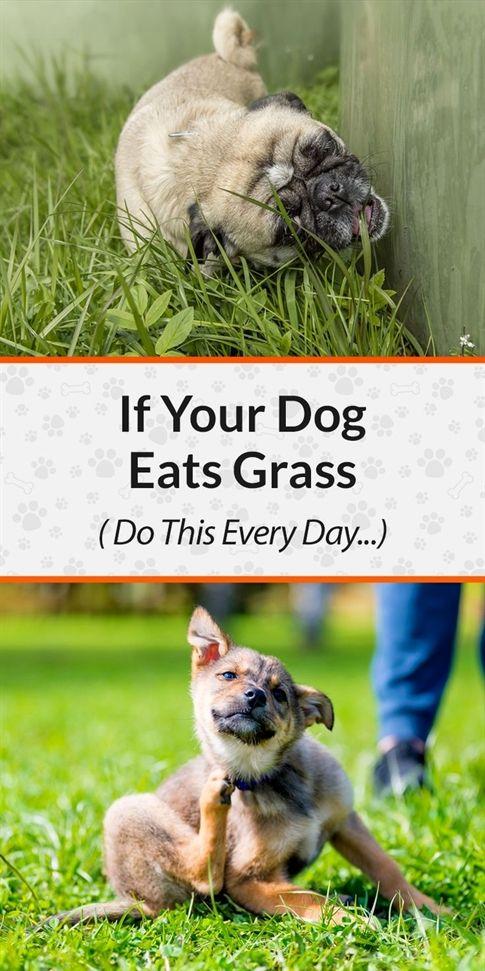 Happy Dog Training Huntington Ny Dog Training Urination Dog