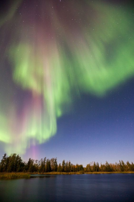 """Adam Hill en Twitter: """"Long tailed #Aurora are usually the most dramatic and…"""