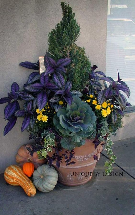 The purple plant is Persian Shield - created by 'Unique by Design Landscaping & Containers.' See them on FB.