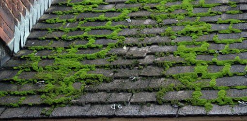 What Causes Moss To Grow On A Roof Grow Moss Roof In 2020 Concrete Roof Tiles Asphalt Roof Shingles Roof Shingles