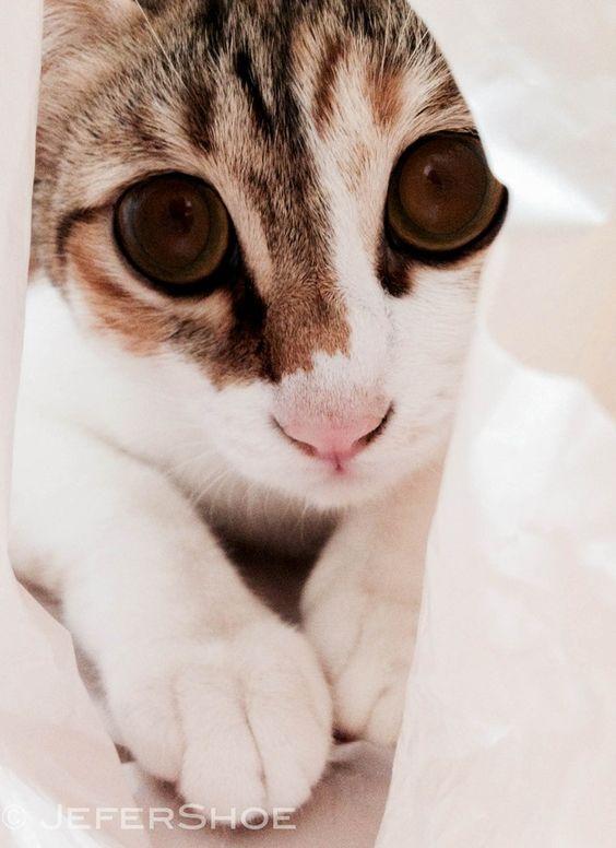 Bubu the cat by Jennifer H on 500px