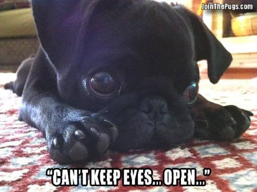 Can't keep eyes open - Join the Pugs