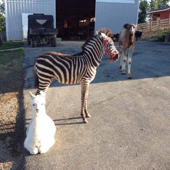 Baby Animals!(: