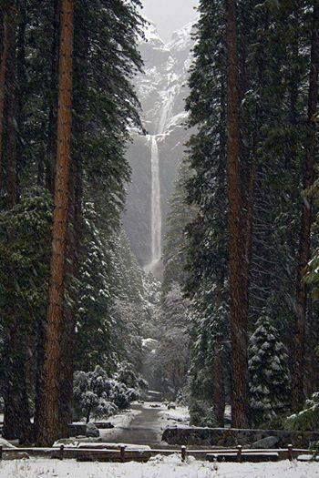 Parco nazionale di Yosemite in Inverno - Skimania