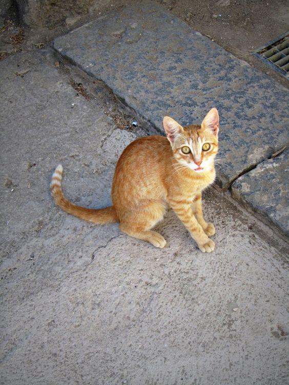 Un #gatto tra le vie del paese... #Ventotene #isola