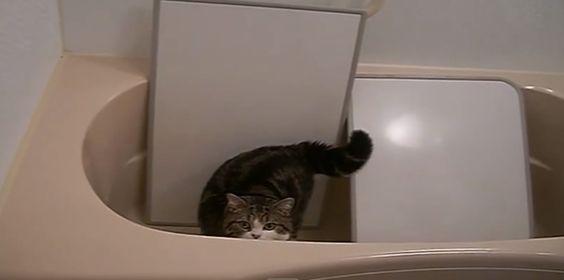 Maru beating out a rhythm on the bathtub cover.    #cvotw