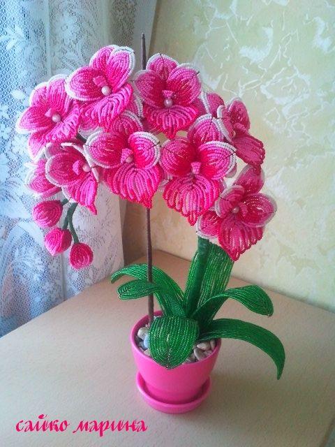 орхидея розовая мечта