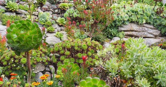 Mix of lovely plants in the Garden of St Michaels Mount