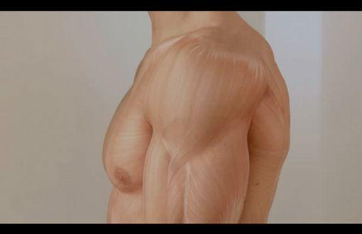 Schulter - Shoulder