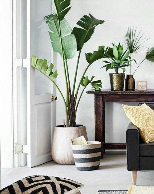 40 Easy Living Room Decorating Ideas With Minimalist Plants Tall Indoor Plants Living Room Plants Birds Of Paradise Plant