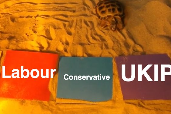 Sarah set up a little polling station, of sorts, by placing four different coloured squares in Sheldon's (SHELL-don? Get it?) sandpit, before waiting to see which he would choose.