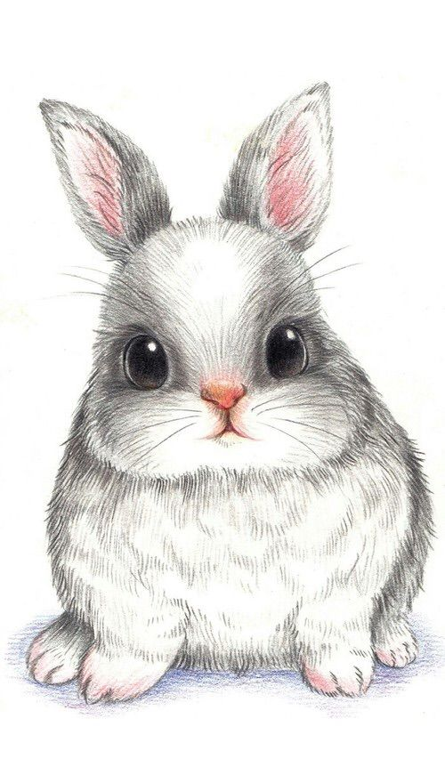 colored pencil drawing bunny rabbit amelias art stuff pinterest colored pencil drawings bunny rabbit and colored pencils