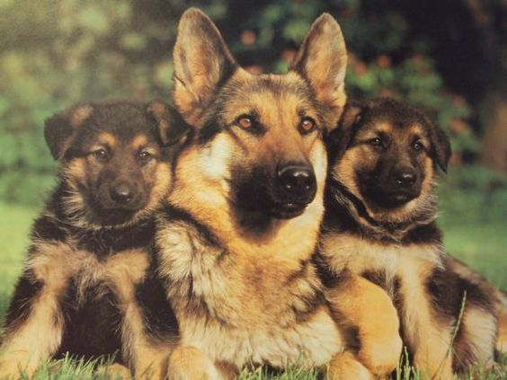 Image result for dog family