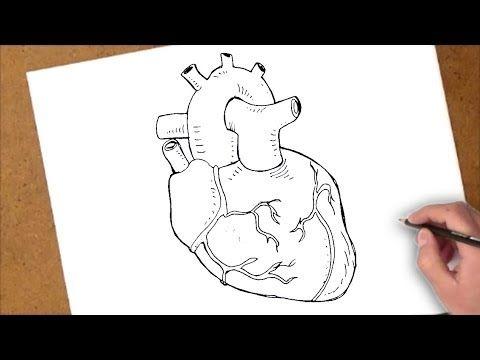 كيفية رسم قلب حقيقي Youtube Art Humanoid Sketch