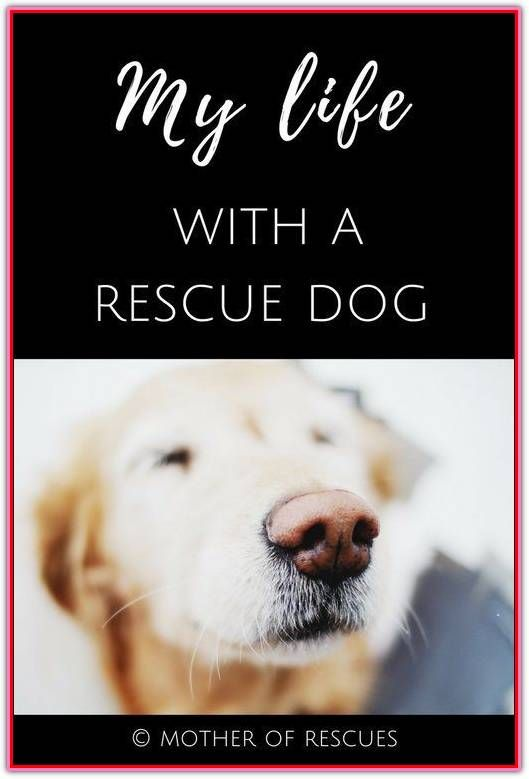 Training A Rescue Dog Is Possible Rescue Dogs Dogs Dog Training