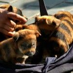 Look at the markings on these puppies!