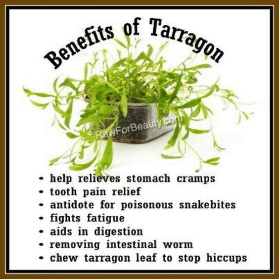 Terragon benefits