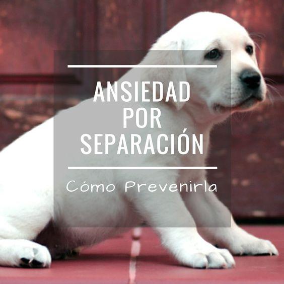 Cómo prevenir la ansiedad por separación en cachorros y adultos Lee aquí el post > http://www.gedva.es/prevencion-ansiedad-por-separacion