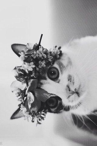 #flowersinhair #flowers #hair