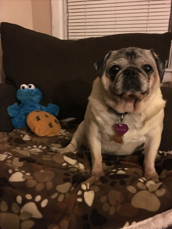 Phoebe and Cookie Monster