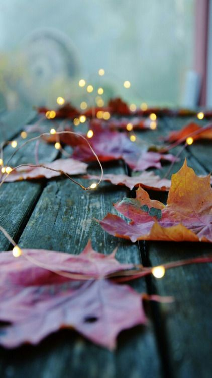 Warm lights and fallen Autumn leaves. Beautiful.: