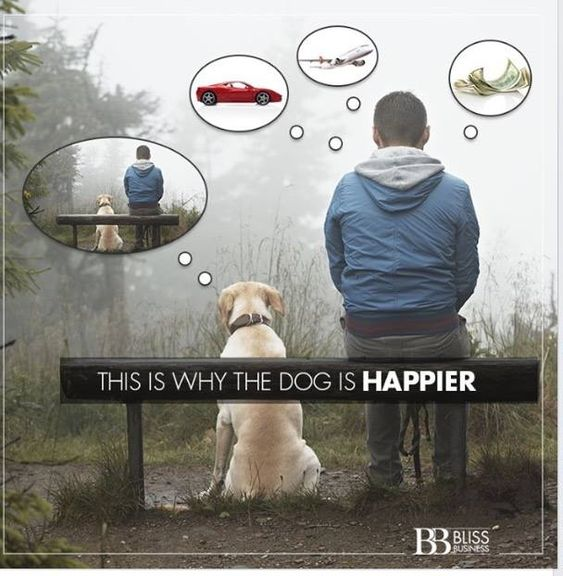 This is why dogs are happier. #aww #cute #animals #cats #dogs
