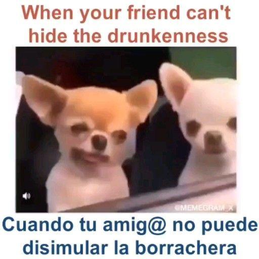 Aprende Ingls Con Videos Meme Chistosos Graciosos Y Divertidos Leccines Divertidos De Ingls Learn Funny Animal Memes Funny Relatable Memes Crazy Funny Memes