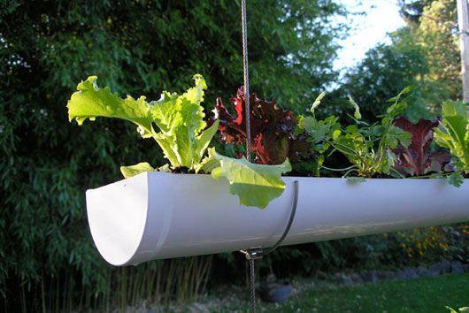 "Make your own ""hanging veggie garden"" using guttering. Great idea!"