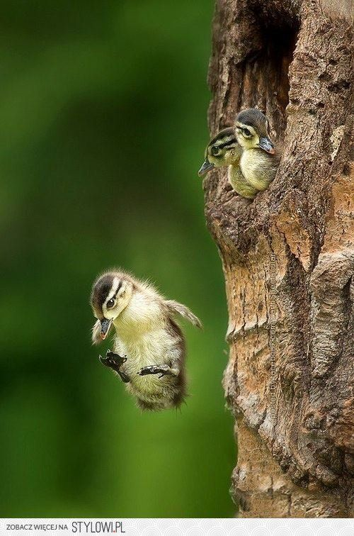 Bird flying from nest - photo#14