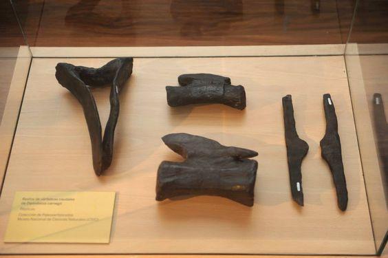 Exposición Diplodocus