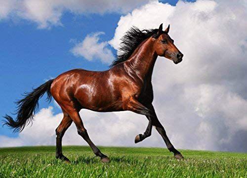 Amazon Com Poster Beautiful Brown Horse Running Animals Pet