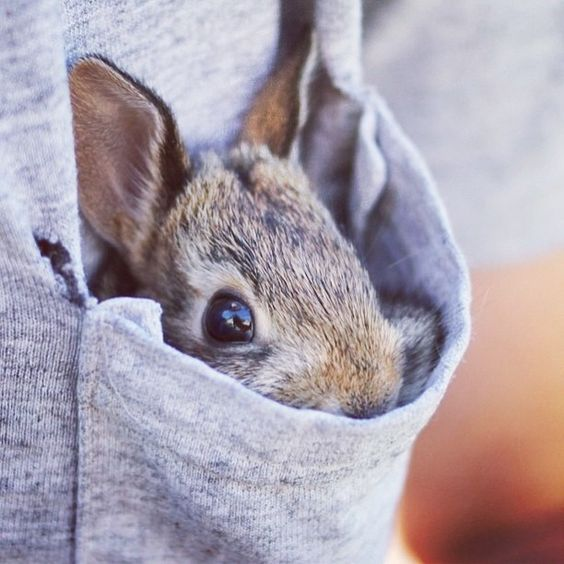 excuse me, you have a bunny in your pocket.. LOL funny pics