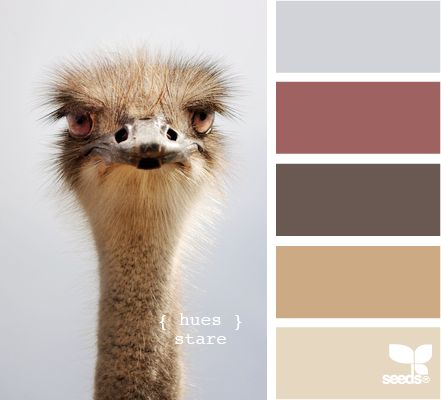 What does a mean bird have to do with these colors? Like 'em anyway.