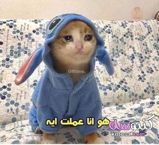 صور القطة الحزينة لوهو ترند القطط2020 قطط مكتوب عليها كلام مضحك قصة القطة الحزينةإنستجرام Funny Picture Jokes Funny Cartoon Quotes Cute Memes