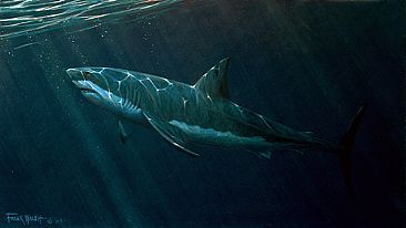Great White Study - Great White shark by Frank Walsh
