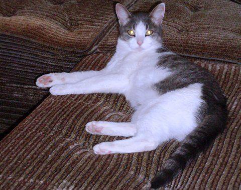 Кошка Ксюша