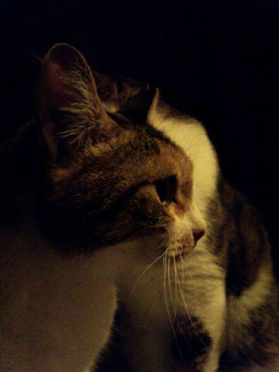 雨の夜の猫たち http://bit.ly/1SD6gad by @devergnodee