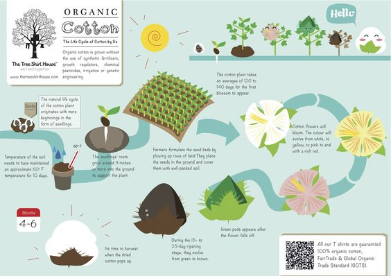 Organic cotton, Cotton and Agriculture on Pinterest
