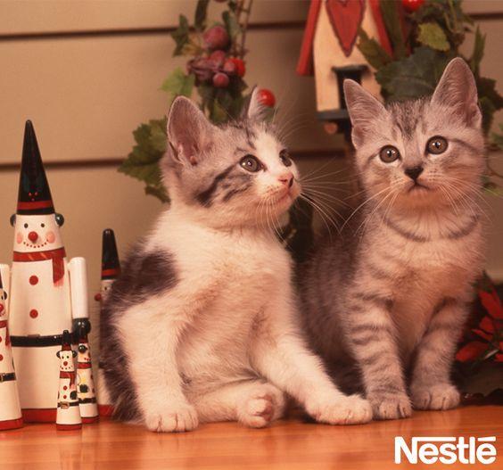 画像C: 子猫とクリスマス。 クリスマスツリー/クリスマス/Christmas