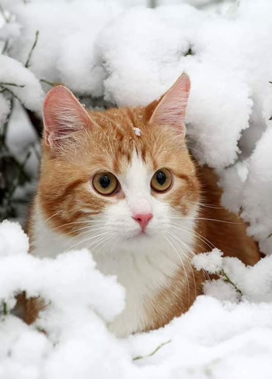 Pin By Rosemary Nichols On Cats Large Small Cute Cats Kittens
