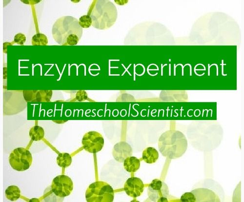 Here\u0027s an easy enzyme experiment to help you see enzymes in action