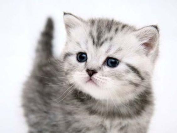 kitties....