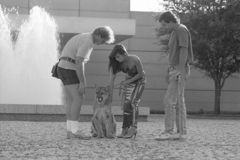 The day the cougar visited the Dallas Museum of Art for a car commercial in 1990.: C Dma, Car Commercial, Cougar Visited