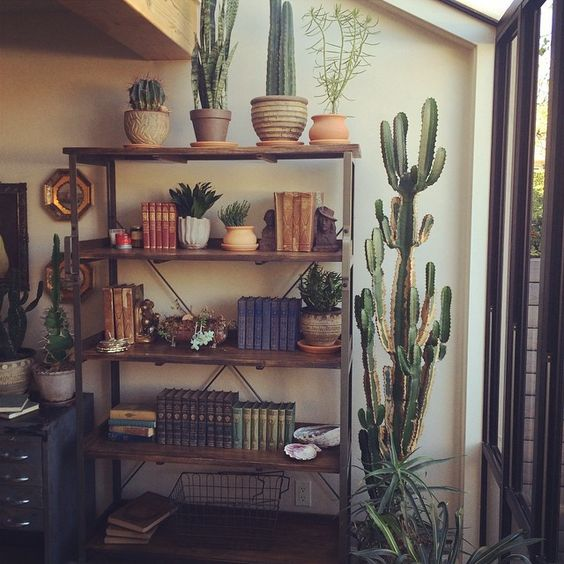 Finally filling up my bookshelves #antiques #vintagebooks #bookcollection #cactus #sunroom