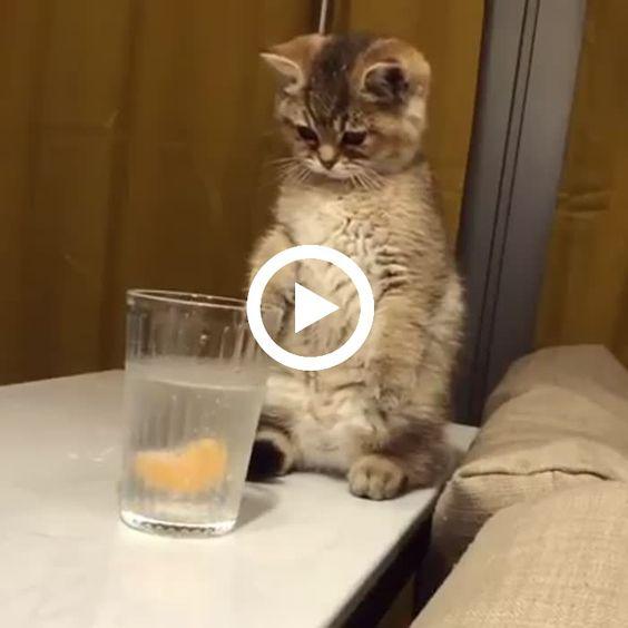 O gatinho quer comer o petisco, mas ficou assustado com o líquido