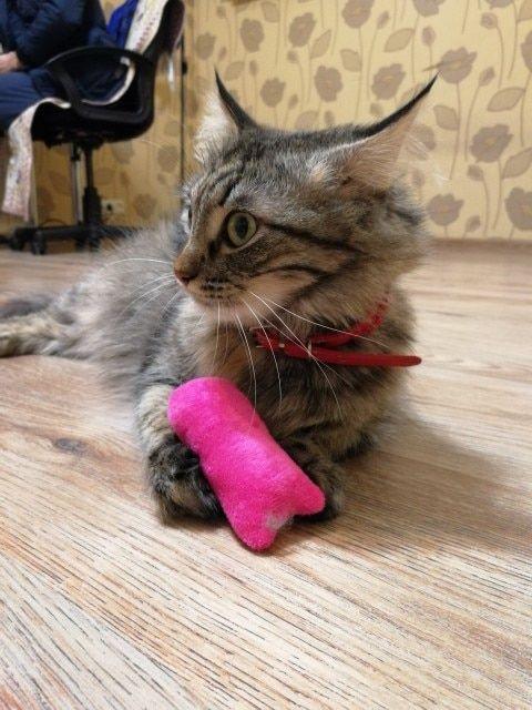 Catnip Chew Toy Mykittycorner Cat Behavior